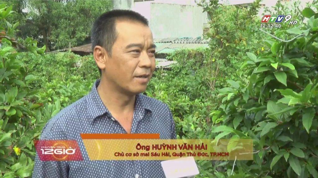 Vườn mai Sáu Hải được HTV đưa tin